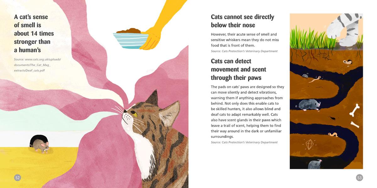Cat-Sense-2