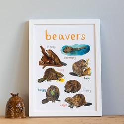 Beavers © Sarah Edmonds