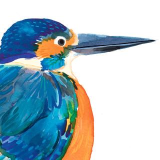 kingfisher close up 2.jpg