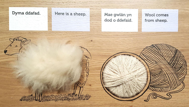 Sarah-Edmonds-Gweithdy-sheep