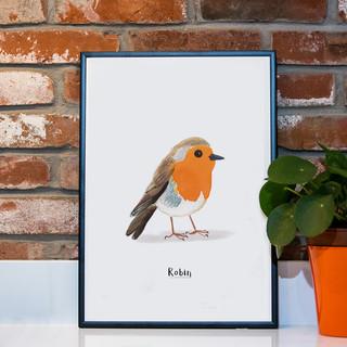 Robin A3.jpg