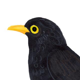 SarahEdmondsA4-blackbird2.jpg