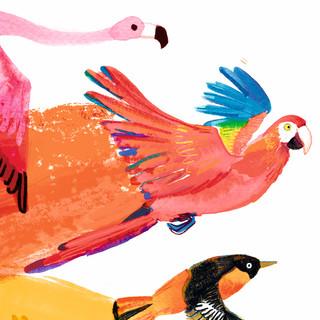 Pride birds web3.jpg