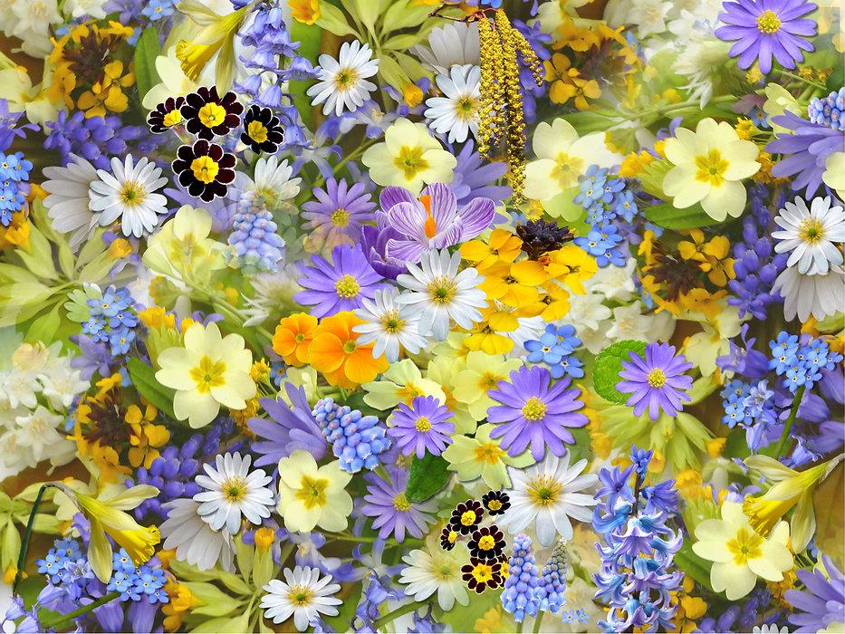 spring-flowers-110671.jpg