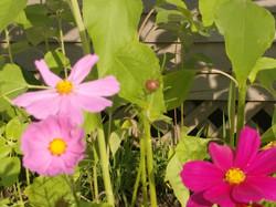 Bootstrap farm flowers