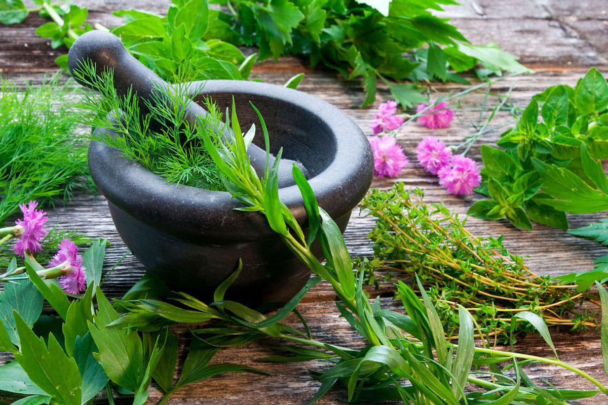 Ayurvedic dietary advice & consultations