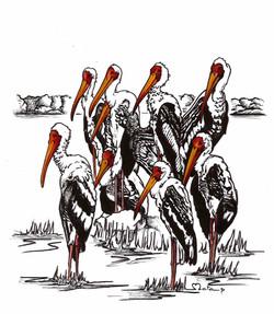 WILDLIFE001_VS2_Storks Colour#_small