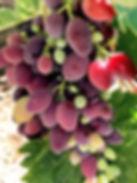 GRAPES 3_edited.jpg
