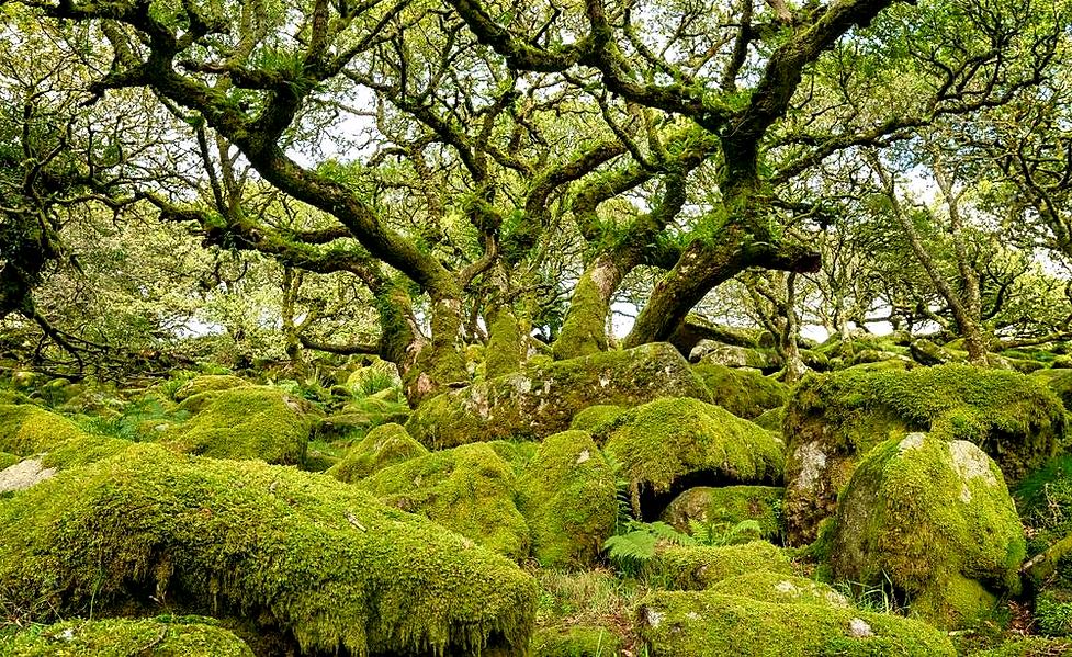 woodlands_edited.png