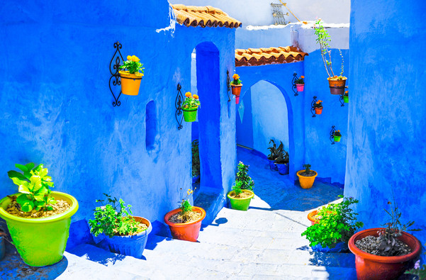 Flowers in Morocco