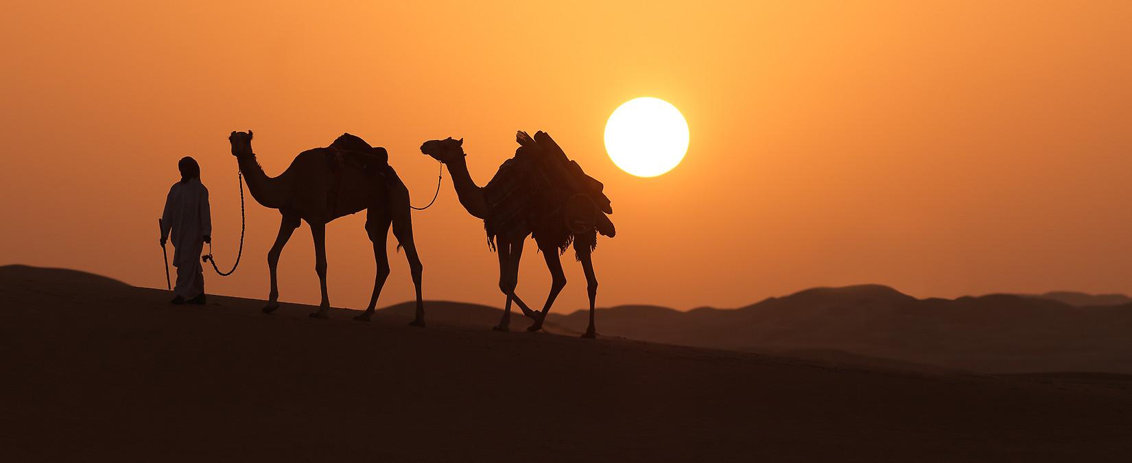 Camel in Desert DTC4F