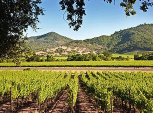 Wine Valley