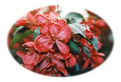 plumflowers.jpg