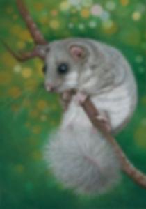 The Curious Climber.jpg