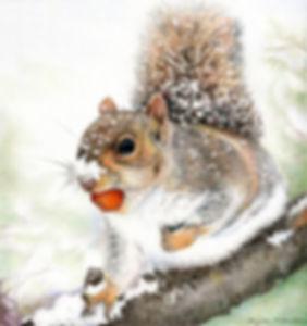 Winter Squirrel.jpg