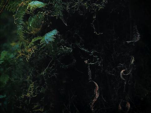 naturaleza viva, cortometraje naturaleza viva, corto naturaleza viva, cortometraje patagonia, corto patagonia, cortometraje sur de chile, corto sur de chile, cortometraje carretera austral, carretera austral, cortometraje, cortometraje chileno, corto chileno, cine chileno, praxinoscopio films, pxfilms, austral road