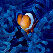 Desperately Seeking Nemo