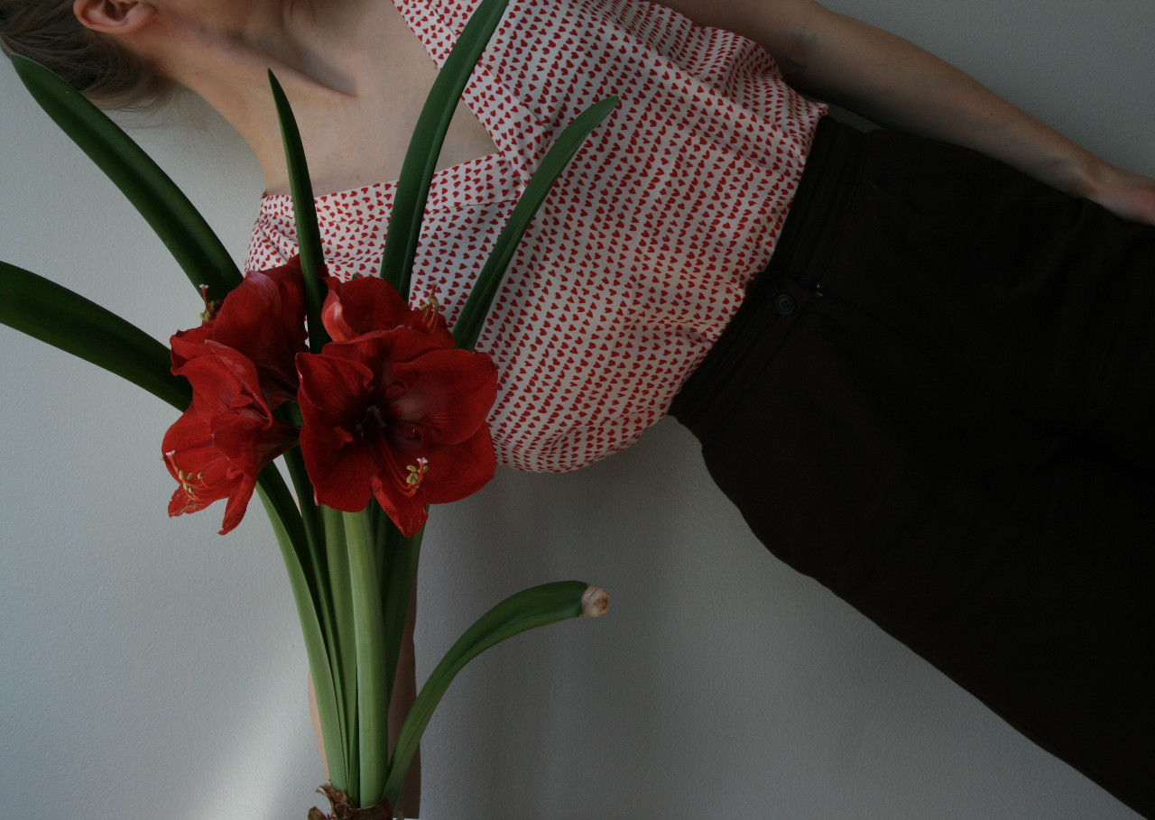 Amaryllis (2020)