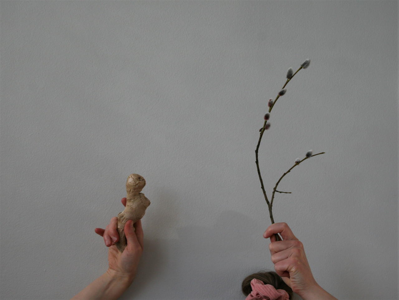 Ginger root, scrunchie, branch from a willow tree (2020)