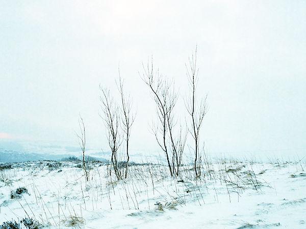 2015.01.20-Snow-3-12_E.jpg