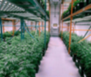 Commercial Grow Facility