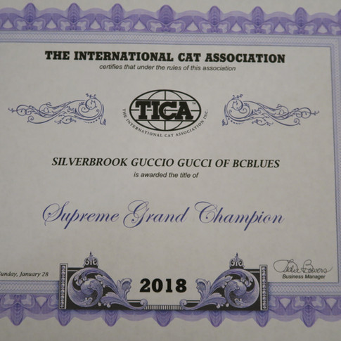 RW Supreme Grand Champion of BCBLUES with TICA