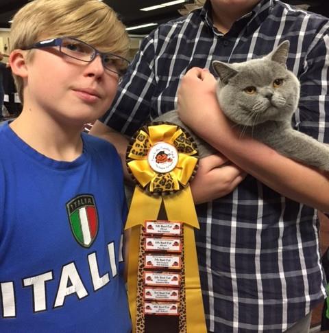 TICA Cat show Awards RW Supreme Grand Champion of BCBLUES