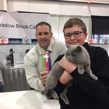 Best Cat award at TICA Show RW Supreme Grand Champion of BCBLUES