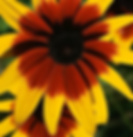 Yellow%20and%20Red%20Flower.webp