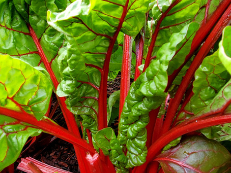 A Swiss Chard Recipe That Even Kids Will Eat