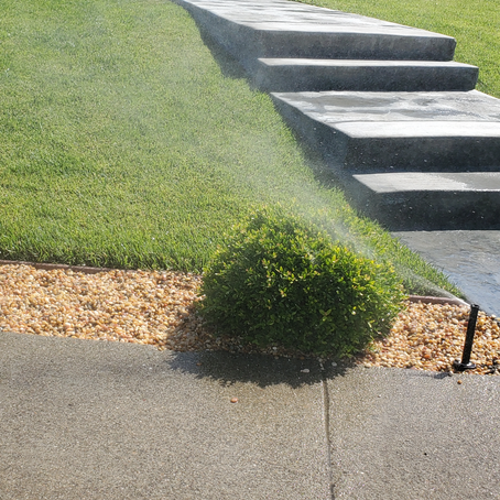 Can You Spot the Watering Problem(s)?