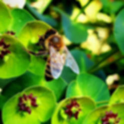 I love bees! Yep! I do, I really really