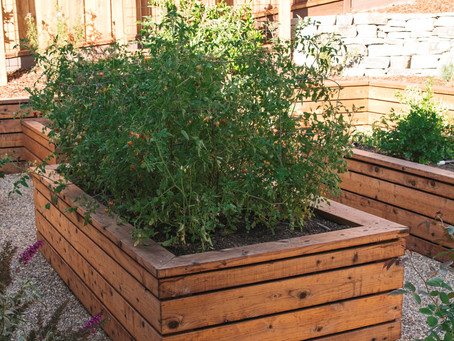 3 Simple Garden Activities You Can Do Now to Improve Your Life