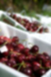 Tasmanian Premium Cherries