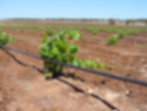 FABAL Shiraz Irrigation