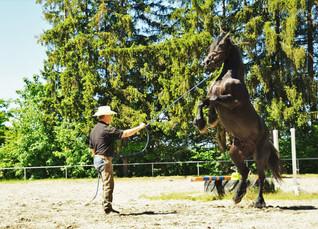 Michael mit Trainingspferd