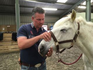 Trainingspferd und Michael