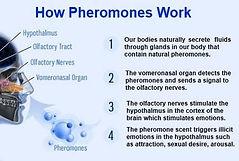 How Pheromones Work, www.reiki4health.net