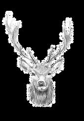 sw-10881-9165-hollys-drawings-w320_edite
