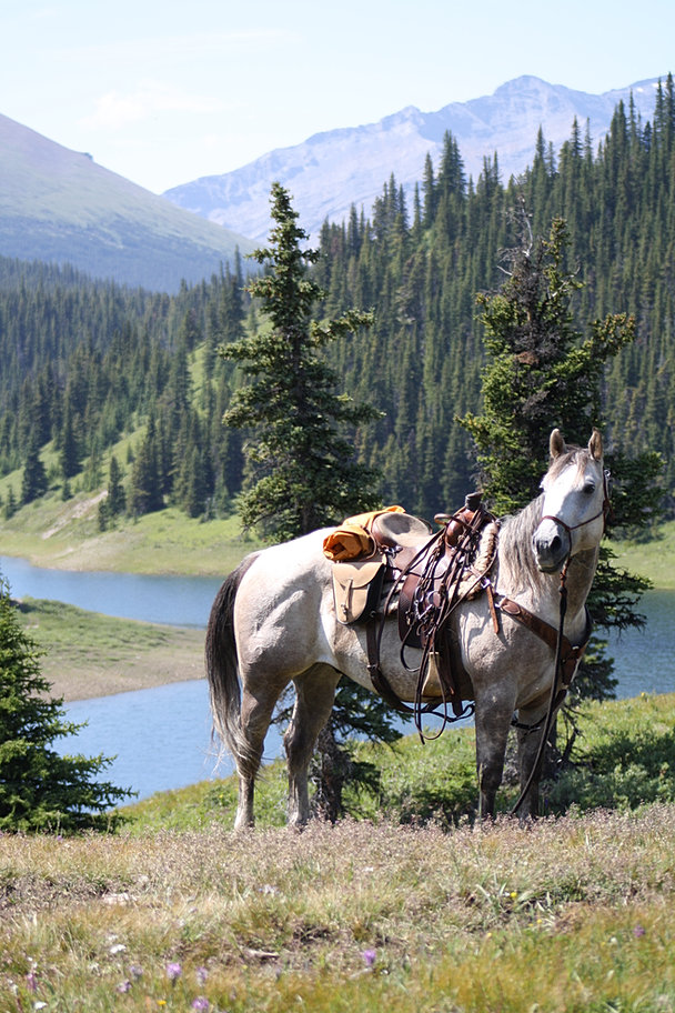 Ranch Dogs For Sale Alberta