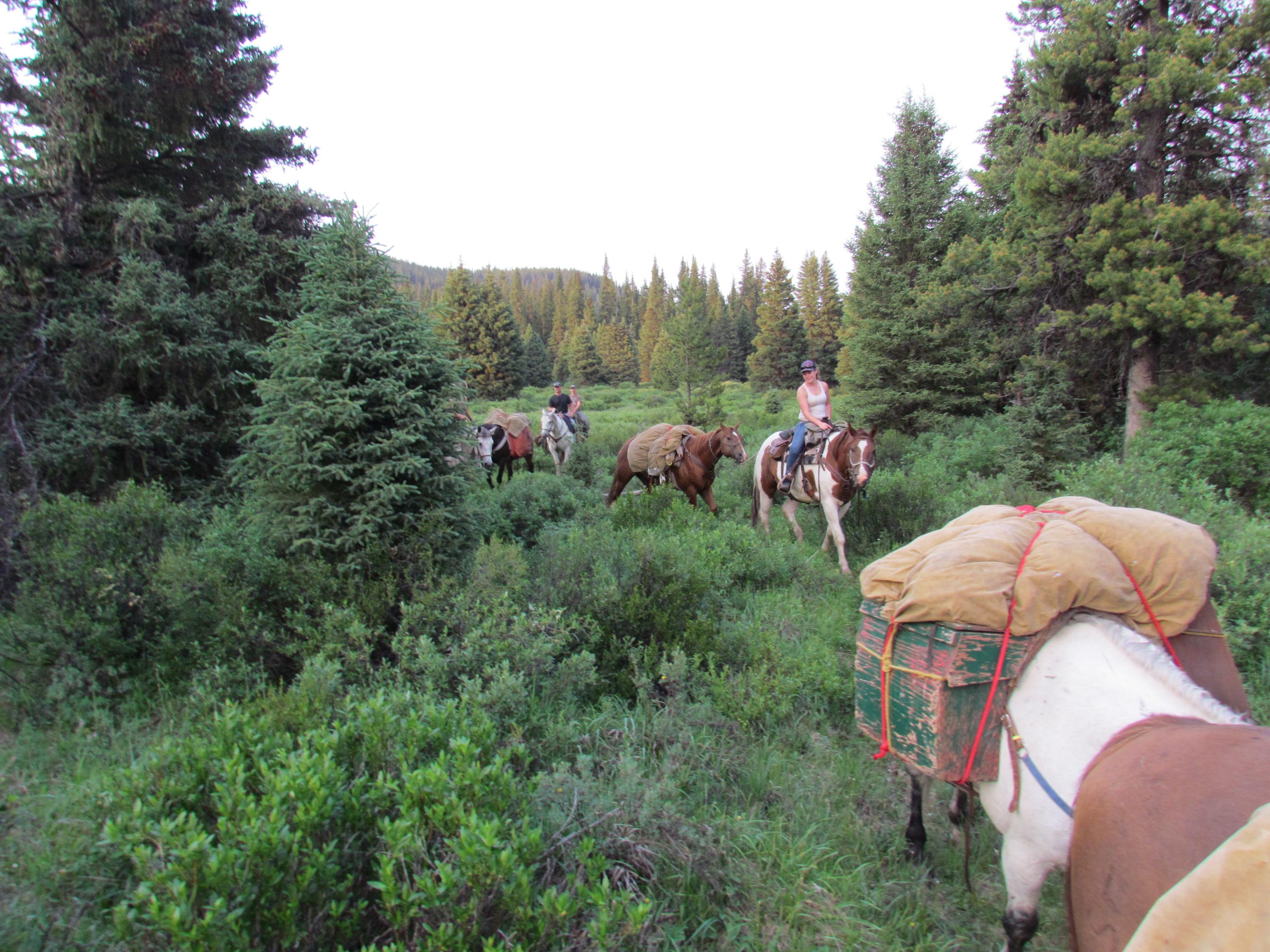 Horses teaching