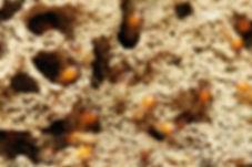 Diagnostic Termite.jpg
