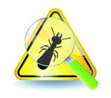 diagnostic immobilier obligatoire termites
