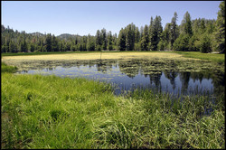 Lower Dry Lake