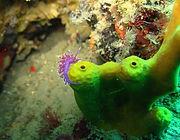 Piran Diving