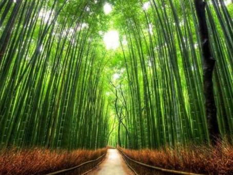 Ensinamento: O exemplo do bambu