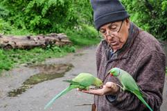 Parakeet Whisperer by Shenan Chandler