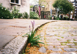 Kerbside Bloom, Charterhouse Square