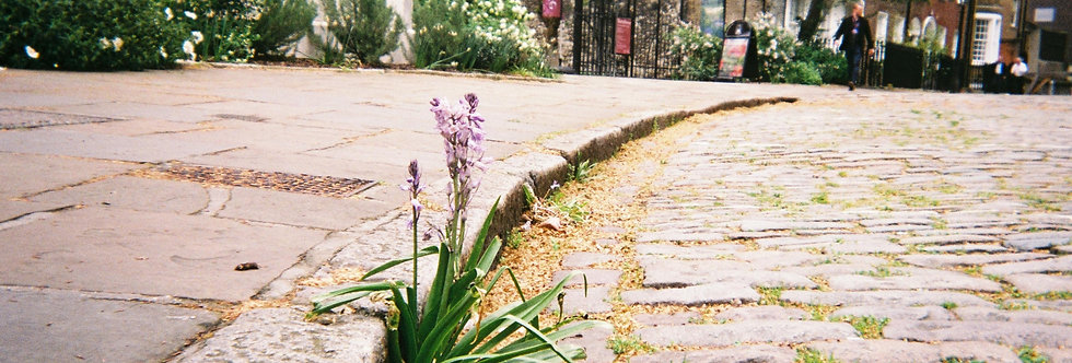 2019 MyLondon top 20: Kerbside Bloom, Barbican by Richard Fletcher