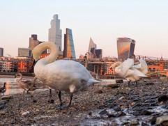 Birds & buldings by Goska Calik